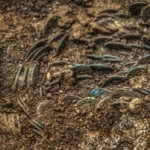 Клад античных бронзовых монет нашли в Швейцарии